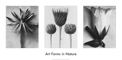 Art Forms in Nature II Art Print