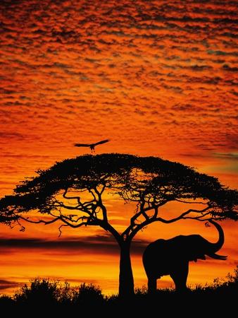 Elefant unter einem breiten Baum