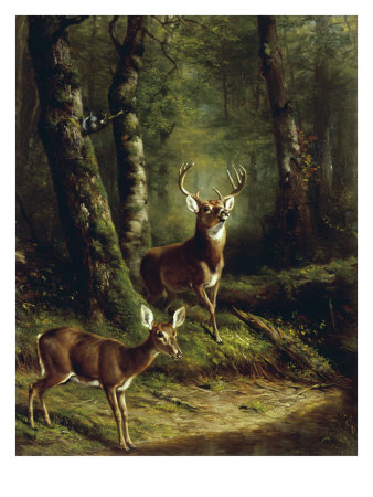 Buck and Doe in the Adirondacks Giclee Print
