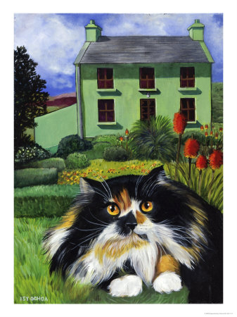 Persian Cat in Ireland (Chat Persan ...