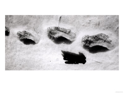 Yeti Footprints in the Snow