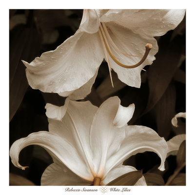White Lilies