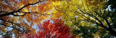 Colorful Trees in Fall, Autumn, Low Angle View Photographic Print