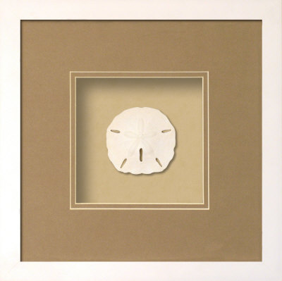 Sanddollar (Beachcomber Collection),