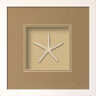 Starfish (Beachcomber Collection) Posters