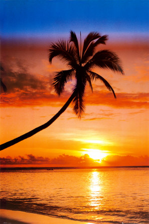 Sunset Palm,