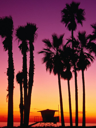 Palm Trees at Sunset, Venice Beach ...