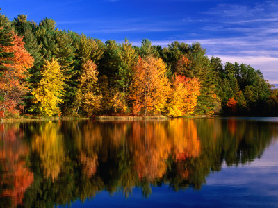 Autumn Trees in New Hampshire, New ...