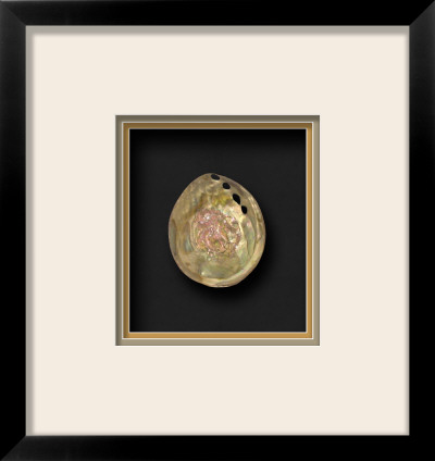 Polished Pink Abalone II