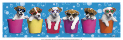 Shady Pups
