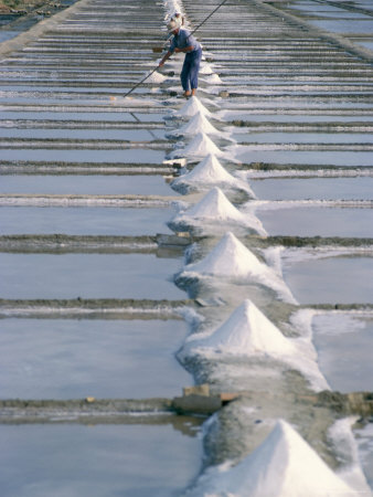Collecting Salt in the Salt Pans, Fier d'Ars, Ile De Re, Charente Maritime, France