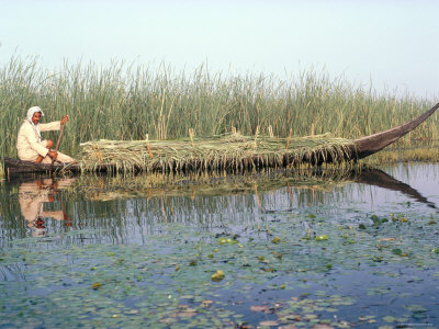 Man Gathering Reeds, Mashuf Boat, Marshes, Iraq, Middle East