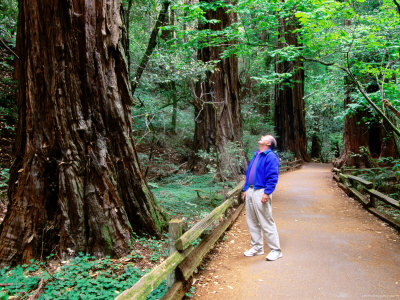 Man on Walkway in Redwood Forest ...
