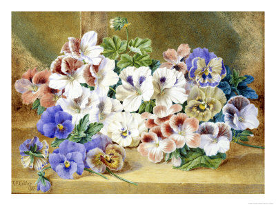 Still Life of Pansies and Pelargoniums
