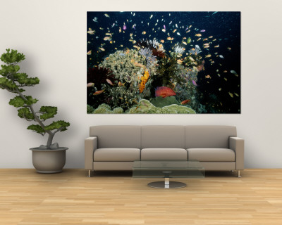 Fish Abound in a Coral Reef off the Coast of Papua New Guinea