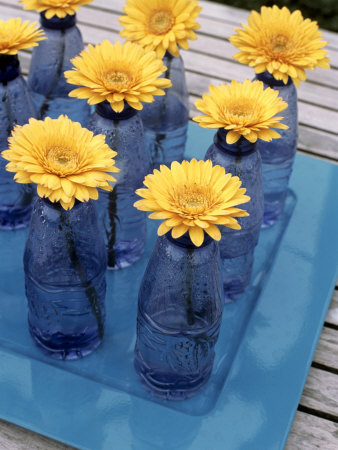 Yellow Gerberas in Blue Bottles