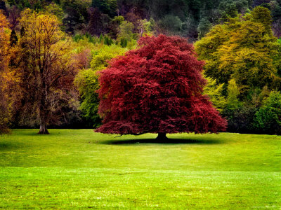 The Red Tree