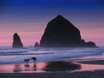 Dogs on Cannon Beach