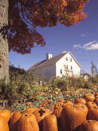 Pumpkins for Sale in Concord, MA