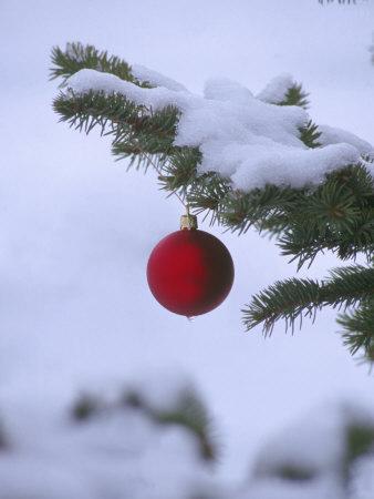 X Mas Ornament on Tree