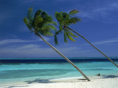 Palm Trees on Tropical Beach, Maldives