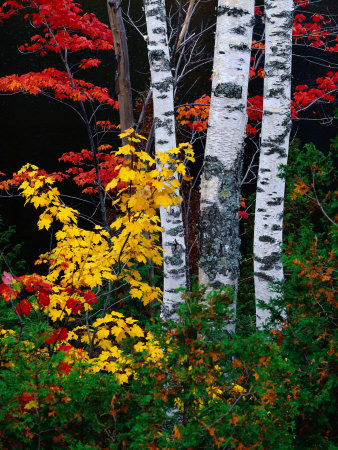 Fall Color, Old Forge Area ...