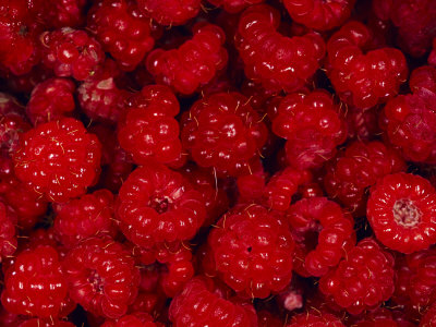 A Pile of Wild Raspberries