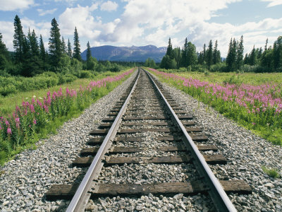 Alaska Railroad Tracks Lined on Either Side by Pink Fireweed
