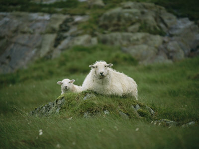 A Ewe and Her Lamb Resting on a Small Mound