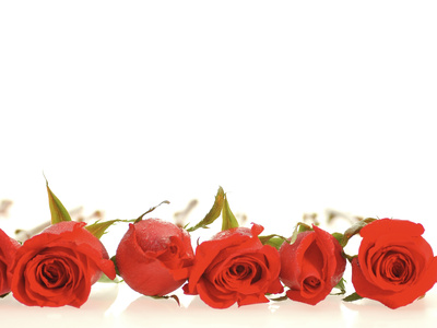 Row of Red Roses