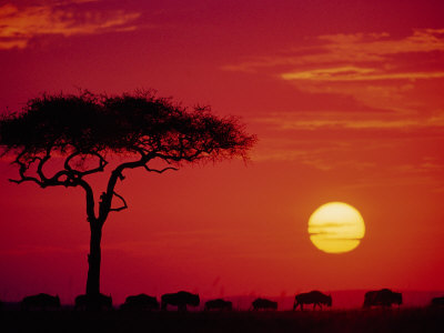 Best Africa Travel Kenya