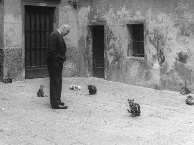 Otto Preminger Looking at Stray ...