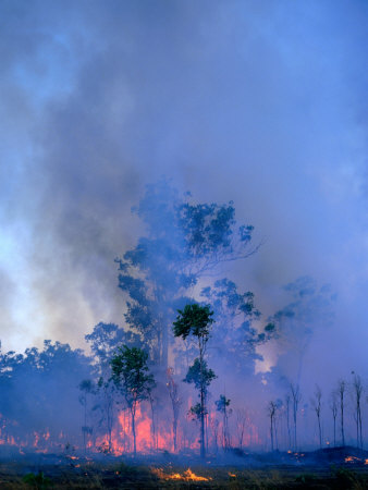 Trees Engulfed in Bushfire, Kakadu National Park, Australia