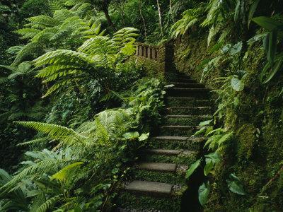 Stone Steps and a Path Cut Through ...