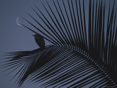A Night View of an Egret Resting on a Palm Frond in the Light of the Moon