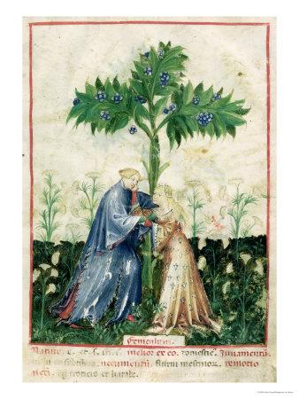 Fennel, from Tacuinum Sanitatis, c.1390-1400