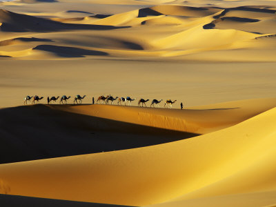 Tuareg Nomads with Camels in Sand ...