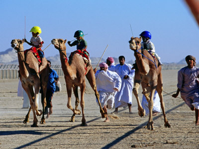 Children Racing Camels
