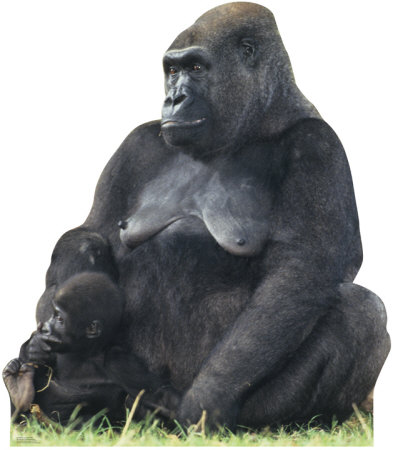 Gorilla Mom & Child