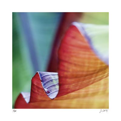 Banana Leaves III - Giclee Print