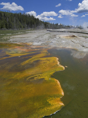 Geyser Hill, Upper Geyser Basin, Yellowstone National Park, Wyoming, USA