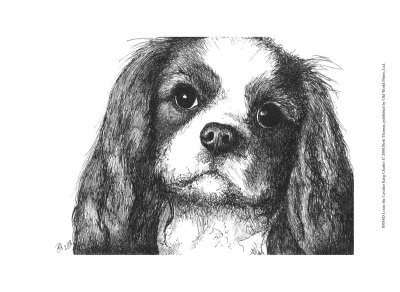 Louie the Cavalier King Charles