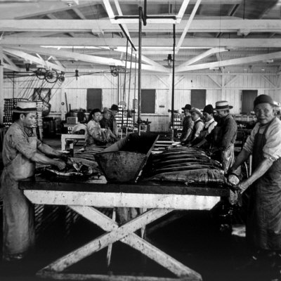 Cleaning Salmon in Astoria Oregon 1900.