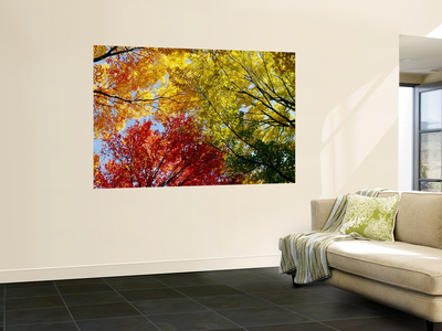 Colorful Trees in Fall, Autumn, Low Angle View Posters