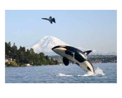 Mount Rainier Orca Killer Whale Blue Angels