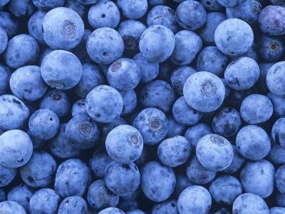 Blueberries, Vaccinium Corymbosum