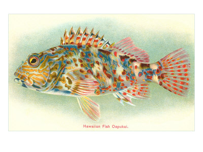 Reprints of the Oapukai are available by clicking on the image.