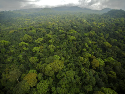 Rain Forest Canopy in the South Coast Region of Bioko Island