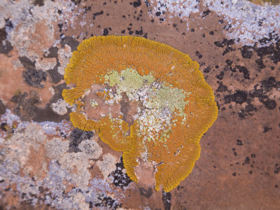 Lichen in Arches National Park, Utah