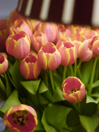 how to say pink in Dutch - roze